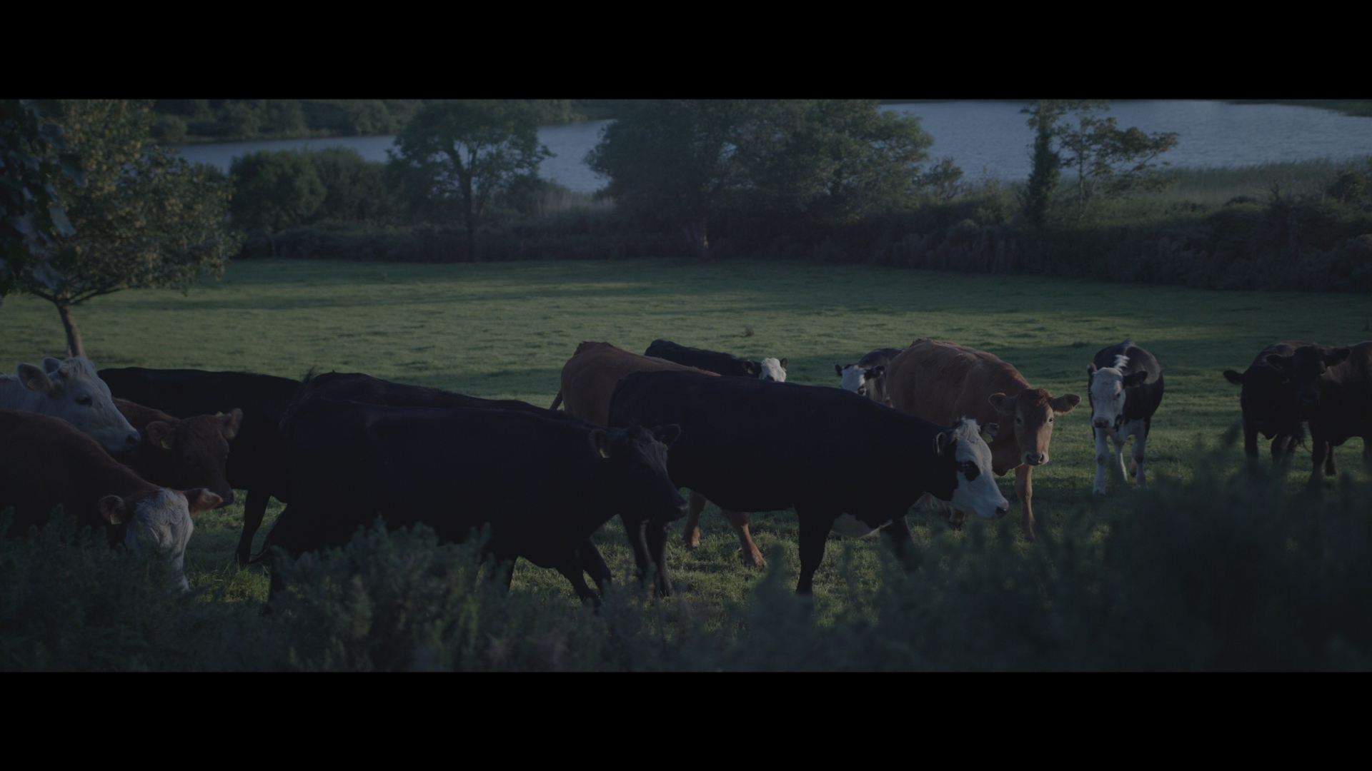 FPN in dark cows_1.2.1.jpg
